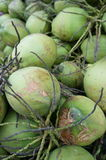 Cluster of green coconuts. In storage Stock Image