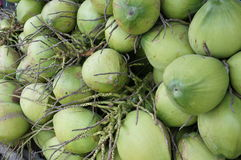 Cluster of green coconuts. In storage Royalty Free Stock Photos