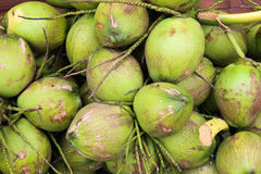 Cluster of green coconuts in storage Stock Photos