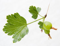 Cluster of a green gooseberry. On a white background Stock Images