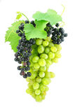 Cluster of green grape isolated on white Stock Images