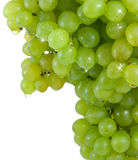 Cluster  green grapes with water drops. Royalty Free Stock Photos