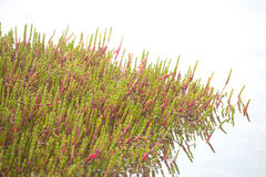 Cluster of marine algae stock photo