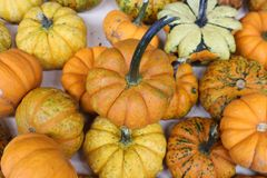 Cluster of multicolored pumpkins and gourds Stock Image