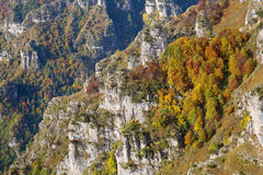 Cluster of multicolored trees on italian Alps Stock Photo