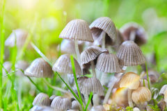 A Cluster of Mushrooms  Stock Photo