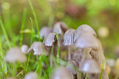 Cluster Of Mushrooms  Stock Photo