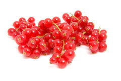Cluster red berries in closeup Royalty Free Stock Photo