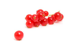 Cluster red berries in closeup Royalty Free Stock Photography