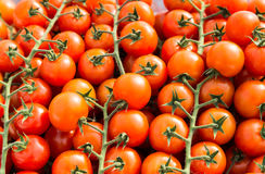 Cluster of red  cherry tomatoes for background Stock Photo