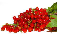 Cluster of red currant Royalty Free Stock Photo