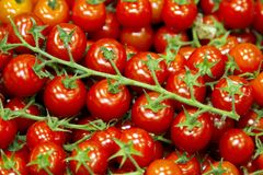 Cluster of red, ripe tomatoes. Cluster of ripe, red tomatoes bound together on a green stem Royalty Free Stock Image