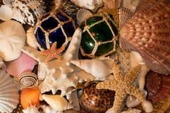 Cluster of Seashells. Background of seashells and starfish Stock Image