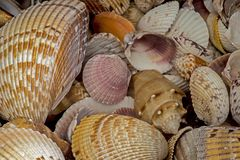A cluster of seashells piled together for decorations. stock photography