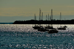A cluster of silhouetted sailboats Stock Image