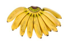 Cluster of small bananas Royalty Free Stock Photography