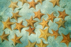 Cluster of starfish under the water on the sand Stock Images