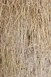 Cluster straw, truss straw Stock Photography