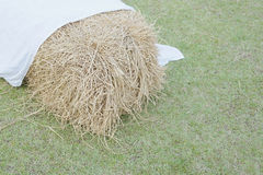 Cluster of straw with white fabric on green lawn Stock Images