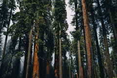 Cluster of Tall Tress during Daytime Stock Photo