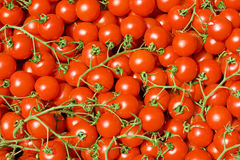Cluster tomato cherry background Stock Photography