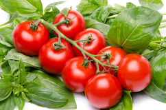 Cluster tomatoes on basil Stock Image