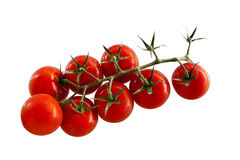 Cluster tomatoes on white background. Cluster tomatoes on isolated white background Royalty Free Stock Photos