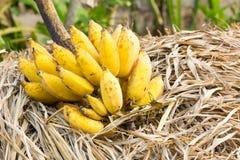 Cluster van banaan stock foto's