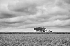 Cluster van bomen Royalty-vrije Stock Foto's