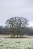 Cluster van bomen op een weide Stock Afbeelding