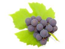 Cluster van druiven Stock Foto