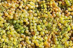 Cluster van groene druiven Stock Foto's