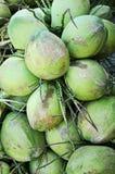 Cluster van groene kokosnoten Stock Foto's