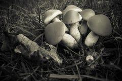 Cluster van mushroms Royalty-vrije Stock Foto