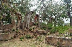 Cluster van oude griezelige bomen Stock Foto