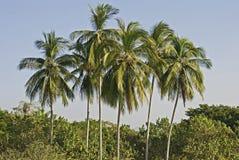 Cluster van palmen royalty-vrije stock fotografie