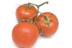Cluster van tomaten royalty-vrije stock afbeeldingen