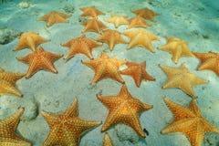 Cluster van zeester onderwater op zandige zeebedding stock foto's
