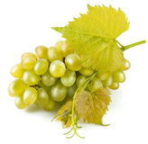Cluster white grapes with leaf Royalty Free Stock Images