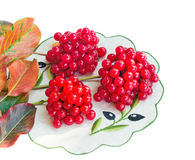 Clusters of berries of a guelder-rose and autumn leaves on a whi Royalty Free Stock Photo