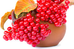 Clusters of berries of a guelder-rose and autumn leaves on a whi Royalty Free Stock Photos