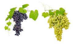 Clusters of blue and white table grapes on light background Stock Images