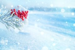 Winter bright background. royalty free stock images