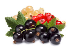 Clusters (bunches) of red,white and black currants together. Clipping paths, shadows separated, infinite depth of fiedl. Design element royalty free stock photo
