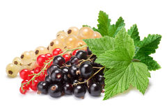 Clusters (bunches) of red,white and black currants together. Clipping paths, shadows separated, infinite depth of fiedl. Design element Royalty Free Stock Images