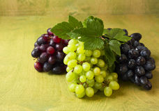Clusters of dark, red and green grapes on a  green  background. Clusters of dark, red and green grapes on a  green wooden background Stock Photos