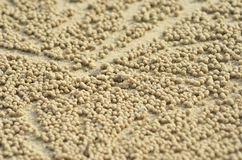Free Clusters Of Golden Balls Of Sand Around A Crab Hole Stock Photography - 120755082