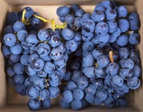 Clusters of ripe grapes in a paper package. Clusters of mature grapes in a cardboard box. Top view Stock Photo