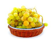 Clusters of ripe muscat grapes Royalty Free Stock Image