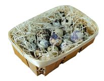Clutch of quail eggs in a basket Royalty Free Stock Photography